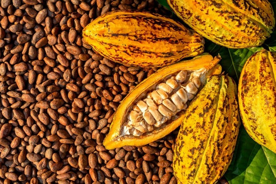 Nigeria Targets Processed Cocoa Exports With $10 Million Plant image